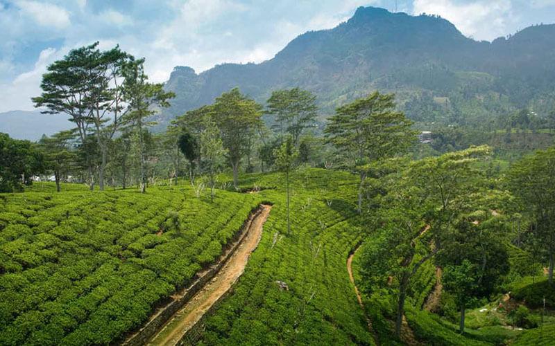 Sacred Lanka Tours